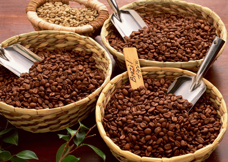 Сорта кофе, арабика, робуста, coffeetree, арабика, кофе, кофейные зерна, кофейное дерево, аромат кофе